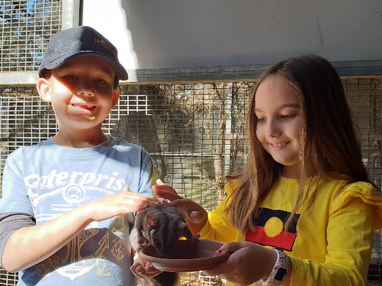 Come and meet our squirrel gliders, Gliders, Ivy, Torah, Saphira, and Ameli in this interactive animal encounter. Ranger Red's Zoo & Conservation Park is the only zoo in Australia to offer glider encounters.