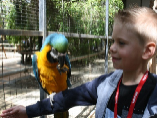 Enjoy a hands on, enrichment training session with our amazing blue and gold macaw.